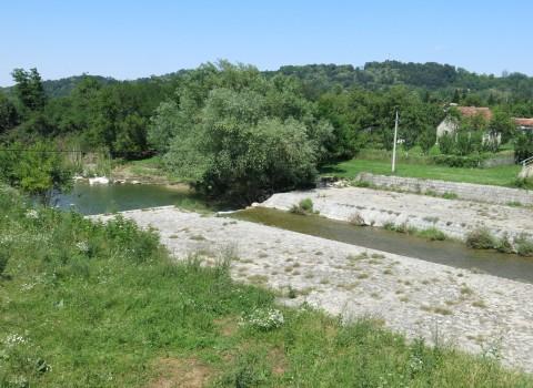 ribnica